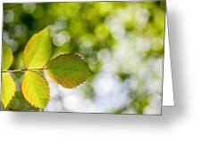 Shades Of Green Greeting Card