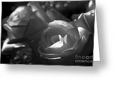 Shades Of Grey In Rose Greeting Card