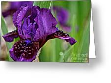 Shades Of Purple Greeting Card