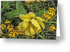 Shades Of Yellow Greeting Card