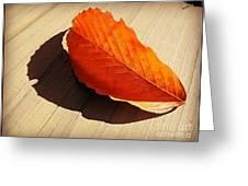 Shadow Cast By Leaf Greeting Card