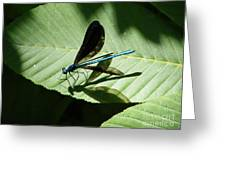 Shadow Fly Greeting Card