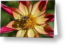 Shadow Of A Bee Greeting Card