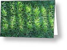 Shadow On The Grass Greeting Card