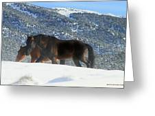 Shadow Stallion Of The Great Basin  Greeting Card