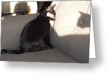 Shadow Staring At Her Shadow Greeting Card