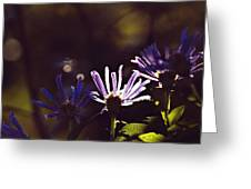 Shadow Treasures Greeting Card