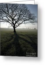 Shadow Tree Greeting Card