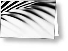 Shadow Zen. Palm Leaf. Monochrome Greeting Card by Jenny Rainbow