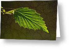Shadows And Light Of The Leaf Greeting Card