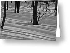 Shadows In Boyertown Park Greeting Card