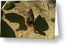 Shadows Of A Mallard Duck Greeting Card