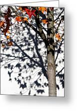 Shadows Of Fall Greeting Card