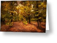 Shadows Of Forest Greeting Card