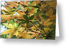 Shadows Of Maple  Greeting Card