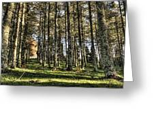 Shadows Of The Larch Forest Sunset No2 Greeting Card