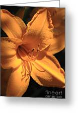Day Lily Shadows Greeting Card