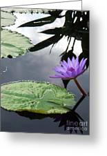 Shadows On A Lily Pond Greeting Card