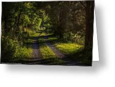 Shady Country Lane Greeting Card by Paul Herrmann