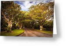 Shady Lane Greeting Card