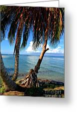 Shady Palm Beach Greeting Card