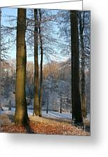 Light And Shadows In Wintertime Greeting Card