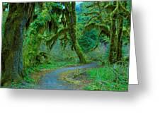 Shag Carpet Greeting Card