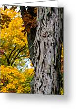 Shagbark Hickory Tree Greeting Card