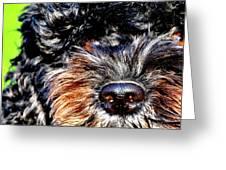Shaggy Black Dog Greeting Card