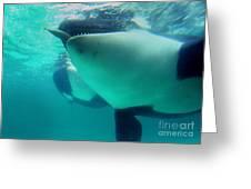 Shamu Was  1965-1971 Orca Sea World California 1968 Greeting Card