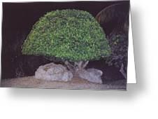 Shaped Tree Greeting Card