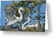 Sharing The Nest Greeting Card