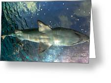 Shark Above Greeting Card