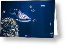 Shark Hunting Greeting Card