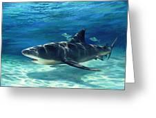 Shark In Depth Greeting Card