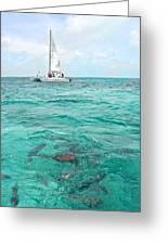 Shark N Sail I Greeting Card