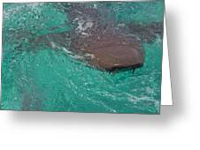 Shark Sees Me Greeting Card