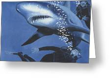 Sharkbait Greeting Card