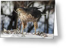 Sharp-shinned Hawk And Feather Greeting Card