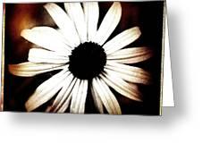 Shasta Daisy - Sepia Tones Photograph Greeting Card