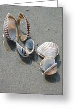 She Sells Sea Shells Greeting Card