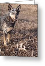 Shed Hunting Greeting Card