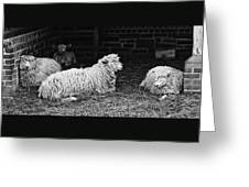 Sheep 2 Greeting Card