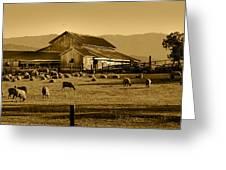 Sheep And Barn Greeting Card