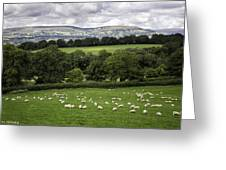 Sheep And More Sheep Greeting Card
