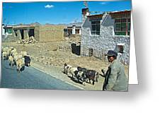 Sheep And Shepherd Along The Road To Shigatse-tibet Greeting Card