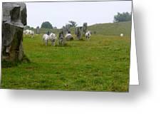 Sheep And Stones At Avebury Greeting Card