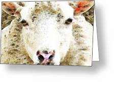 Sheep Art - White Sheep Greeting Card