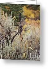 Sheep Creek Canyon Wyoming 11 Greeting Card