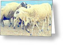 It's So Sheep To Be In The Middle Of A Crowd Greeting Card